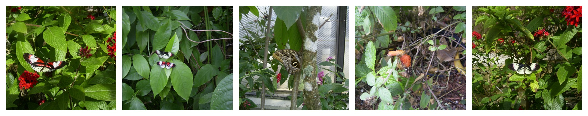 Pictures from the Butterfly House, Ft. Lauderdale, FL (2013)